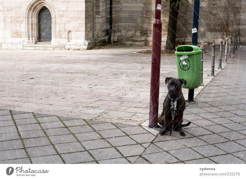 Ich komm gleich wieder Hund Einsamkeit ruhig sitzen warten Platz Sicherheit Sehnsucht Straßenbeleuchtung Tier Müllbehälter gehorsam Hundeleine Blick Licht