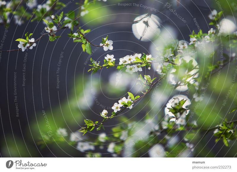 Winter ade! Natur Baum Pflanze Blatt Blüte Frühling authentisch natürlich Duft Zweige u. Äste Frühlingsgefühle Wildpflanze
