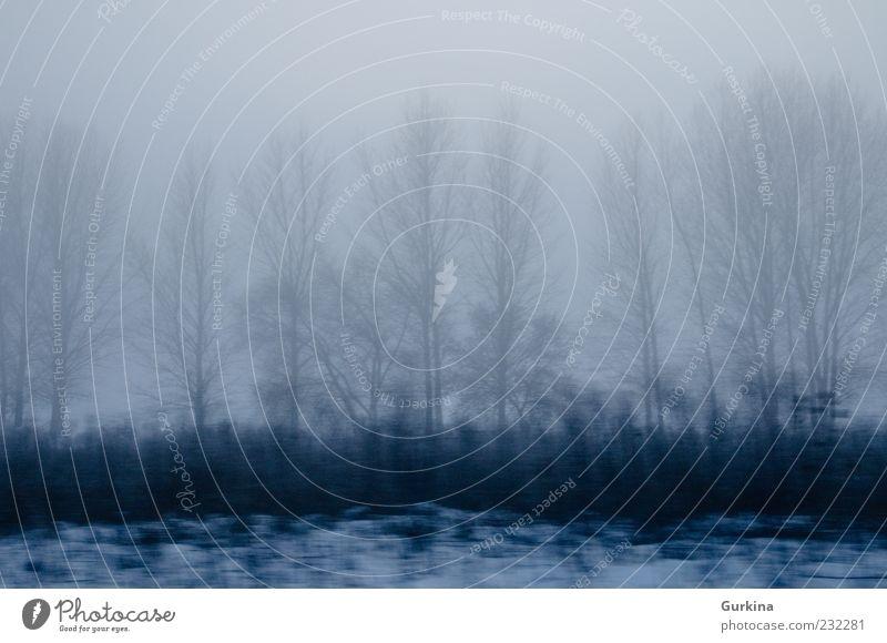 Natur Baum blau Pflanze Winter dunkel kalt Schnee grau Regen Landschaft Zufriedenheit Nebel Umwelt nass Geschwindigkeit