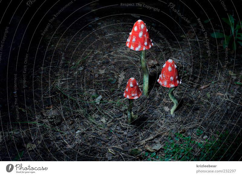 Schwammerlkönig Natur Pflanze Herbst Umwelt Urelemente Pilz Licht Nacht Wildpflanze Fliegenpilz