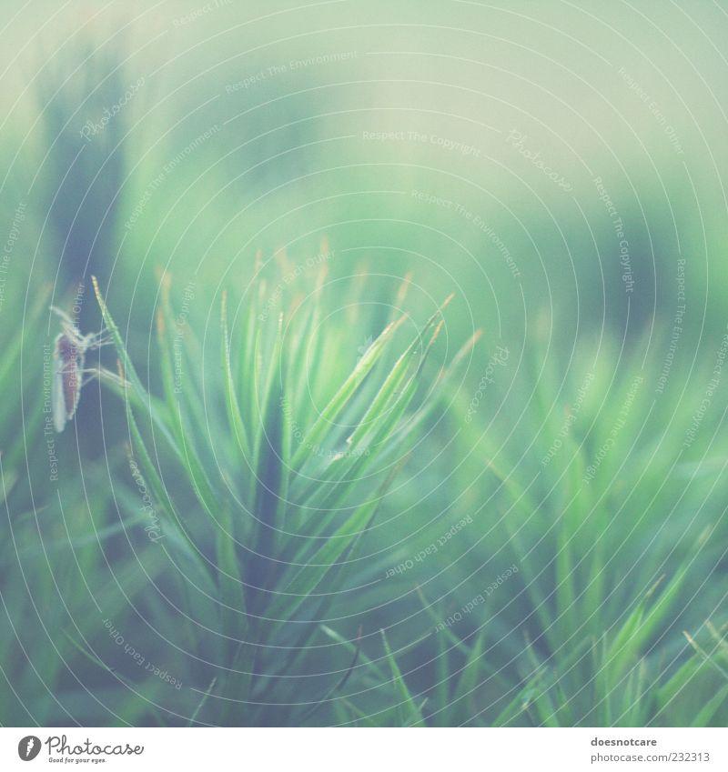 blassgrün grün Pflanze Tier sitzen Fliege weich zart Insekt Quadrat Moos Waldboden Stechmücke vergrößert Pflanzenteile
