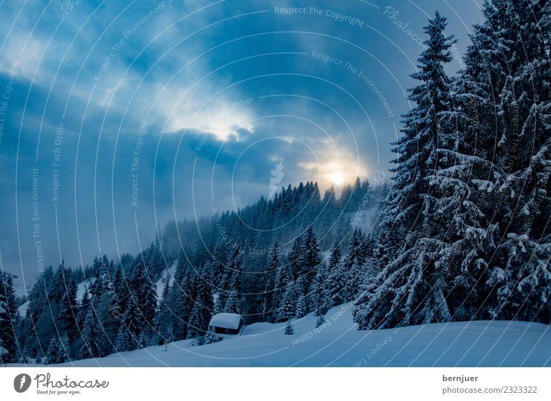 Winterlandschaft Natur Landschaft Pflanze Wolken Eis Frost Schnee Baum Alpen Berge u. Gebirge ästhetisch blau schwarz ruhig kalt Umwelt Fichte Wald Hütte