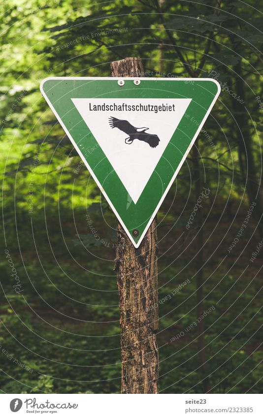 Schild im Wald Naturschutzgebiet Schilder & Markierungen Baum Umwelt Pflanze Tier Umweltschutz Seeadler Bauwerk Politik & Staat Schutz grün Blatt wandern