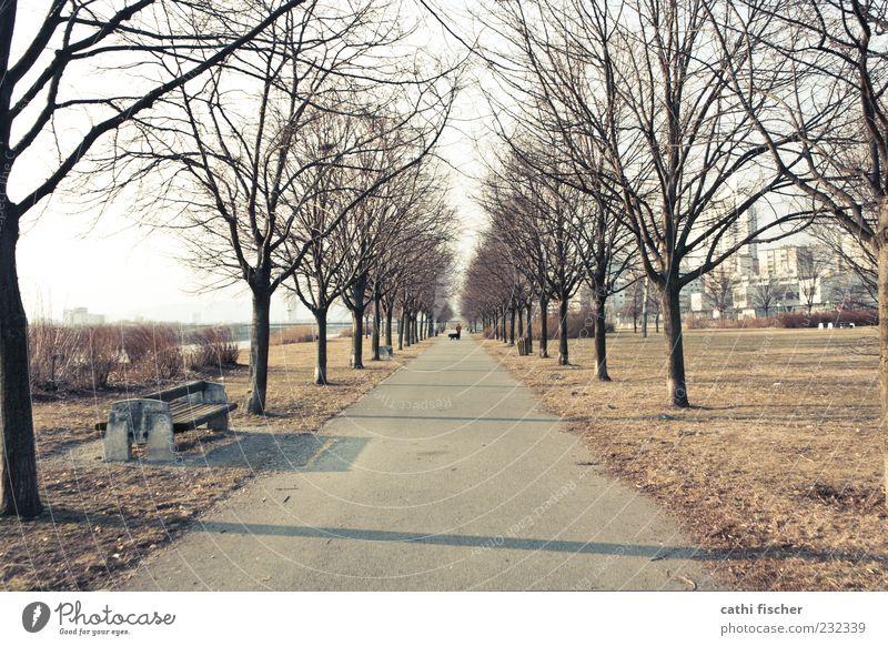 winterende Ausflug Mensch 1 Umwelt Natur Winter Klima Schönes Wetter Pflanze Baum Park Flussufer Wien Österreich Hauptstadt Stadtrand braun Symmetrie Allee