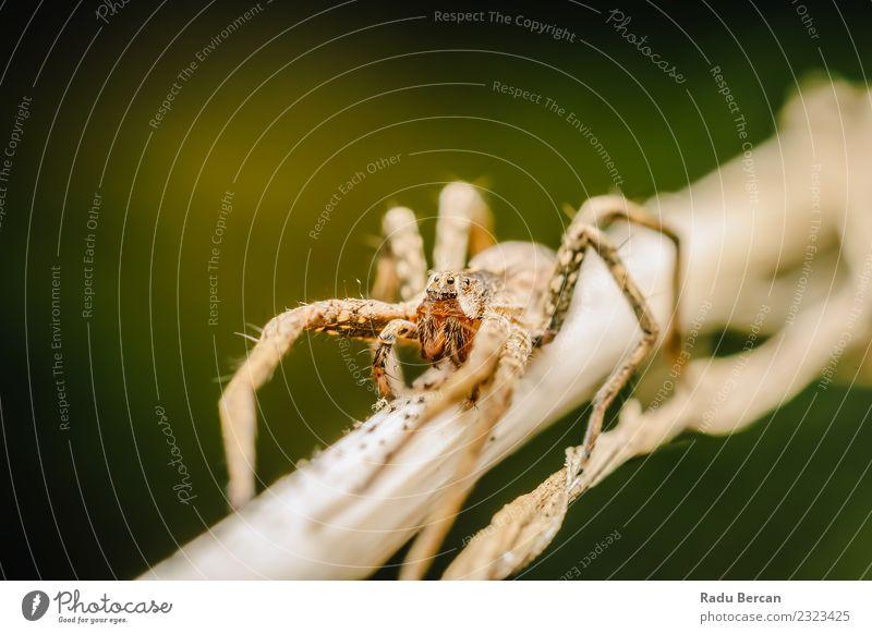 Kinderzimmer Web Spider Umwelt Natur Pflanze Tier Sommer Blatt Garten Wildtier Spinne Tiergesicht 1 klein natürlich wild braun grün weiß Angst gefährlich