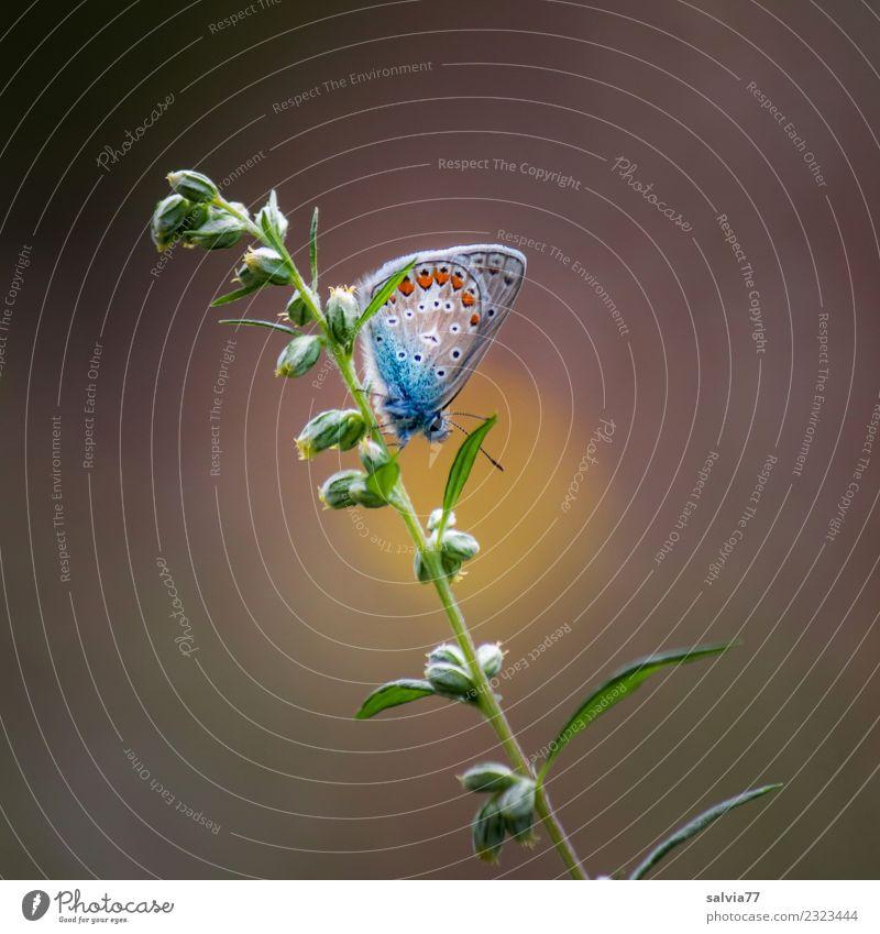 Ruheplatz Natur Sommer Pflanze schön Erholung Tier Einsamkeit ruhig Wärme Blüte natürlich Gras klein Zeit oben Zufriedenheit