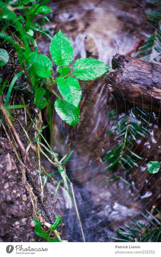 somewhere only we know [600] Natur blau Wasser grün schön Pflanze Blatt kalt Holz Frühling nass natürlich wild Boden Flüssigkeit feucht