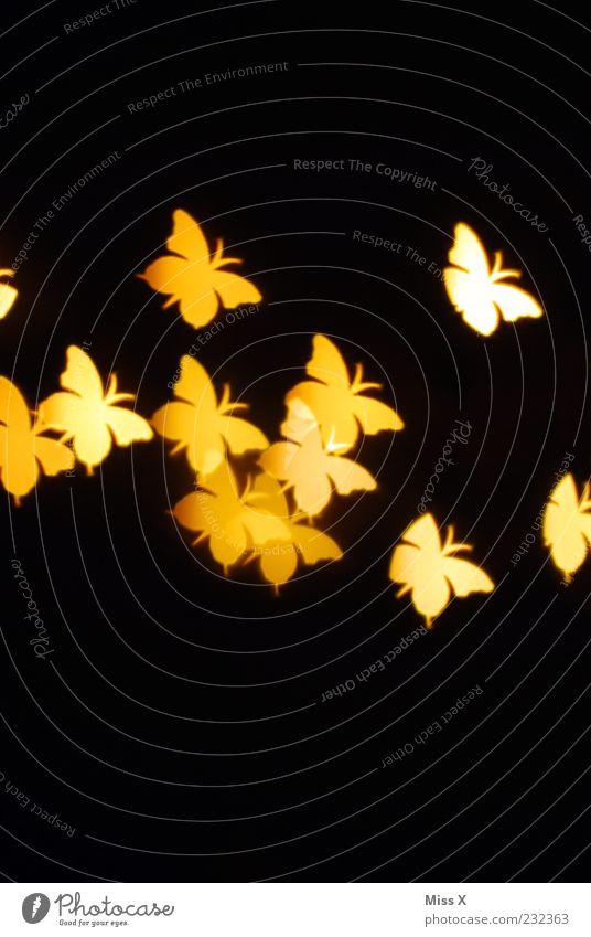Lichtpunkte Tier Schmetterling Flügel Schwarm fliegen gelb Insekt Strukturen & Formen Lichterscheinung schwarz Farbfoto Muster Menschenleer Textfreiraum oben