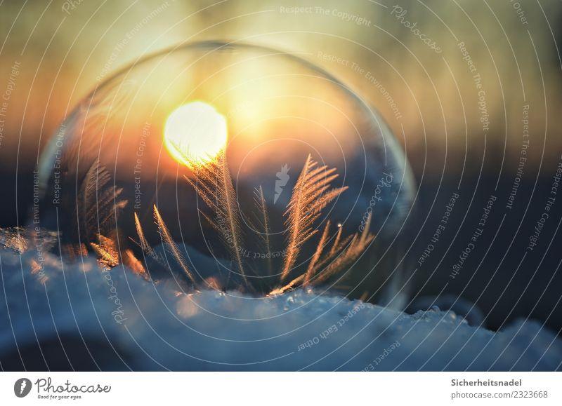 Seifenblase und Sonnenuntergang Sonnenaufgang Winter Schnee kalt frieren gefroren Eiskristall Gegenlicht Bubble Blase Außenaufnahme Nahaufnahme Makroaufnahme