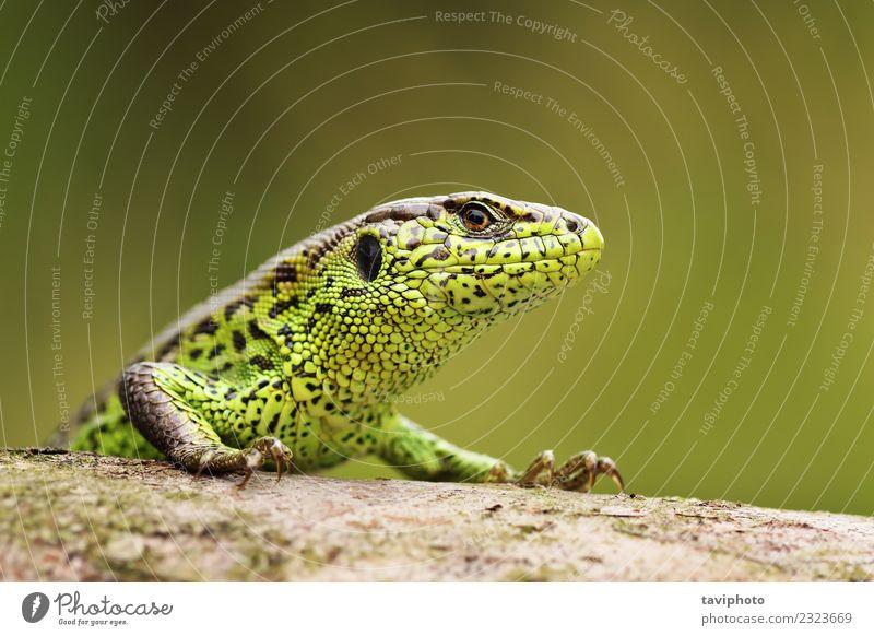 Natur Mann schön Farbe grün Tier Gesicht Erwachsene Umwelt natürlich klein Sand wild Haut Fotografie Lebewesen