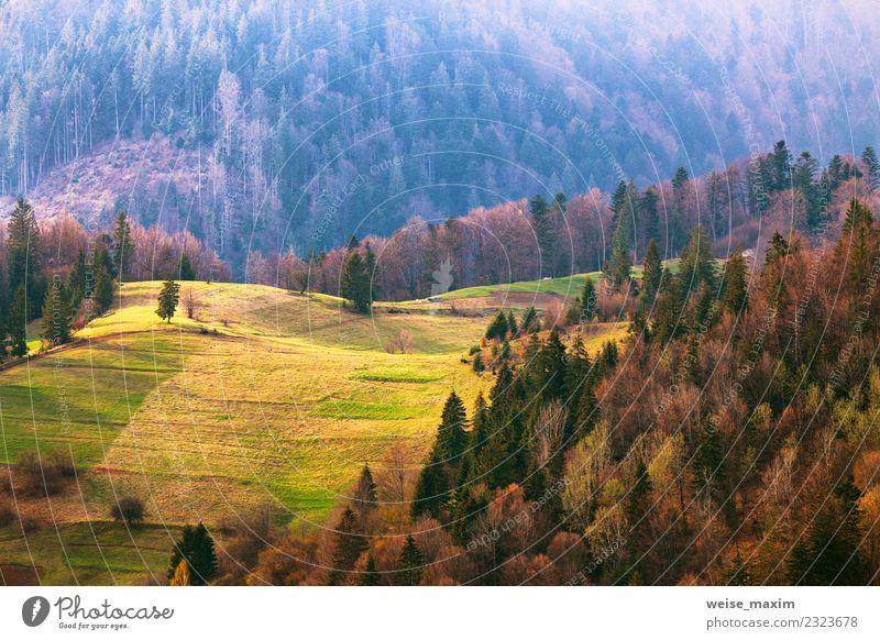 Grüne Hügel im Bergtal. Frühlingslandschaft. schön Ferien & Urlaub & Reisen Tourismus Sommer Berge u. Gebirge Umwelt Natur Landschaft Baum Gras Park Wiese Wald