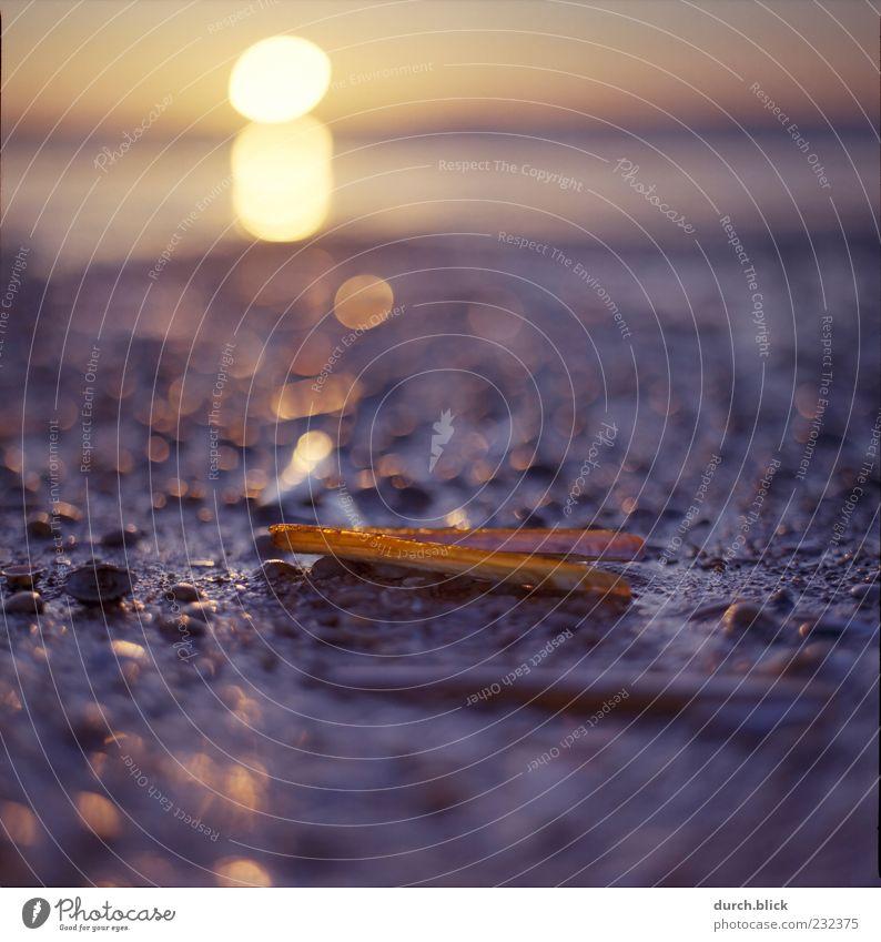 Strandgeglitzer Natur Sand Wasser Himmel Horizont Sonne Sonnenaufgang Sonnenuntergang Küste Muschel Muschelschale Stein dünn nah nass schön geduldig ruhig