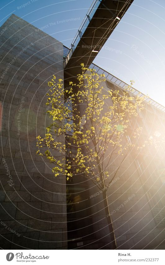 Frühling in Berlin Baum Blatt gelb Gebäude Fassade Beginn Brücke Blühend Lebensfreude Blendenfleck Frühlingsgefühle