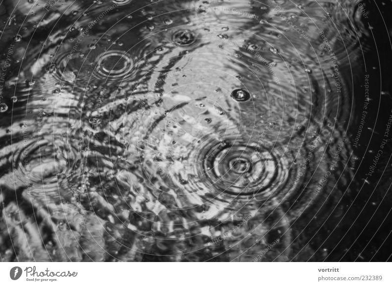 ein verregneter Tag Natur Wetter schlechtes Wetter Regen Teich See Wasser bedrohlich kalt einzigartig Symmetrie Wassertropfen Kreis Reflexion & Spiegelung