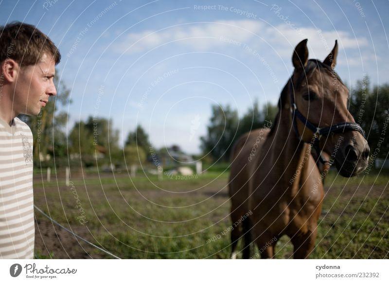 Männer, die auf Pferde starren Mensch Mann Natur Ferien & Urlaub & Reisen Sommer Wolken Ferne Umwelt Landschaft Leben Wiese Freiheit träumen Freizeit & Hobby