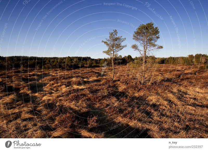Frühling in Bayern Umwelt Natur Landschaft Himmel Wolkenloser Himmel Baum Gras Sträucher Moor Sumpf Farbfoto Außenaufnahme Dämmerung Menschenleer