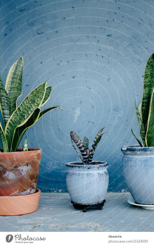 blauer Raum und Pflanzen Topf Lifestyle elegant Stil Design Leben harmonisch Freiheit Sommer Häusliches Leben Wohnung Haus Natur Topfpflanze Stimmung Freude