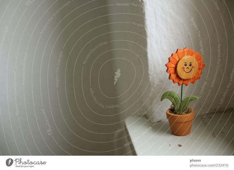 Unbedeutend doch zufrieden Freude Glück Wohlgefühl Zufriedenheit ruhig Sonne Blume Topfpflanze Dekoration & Verzierung genießen Lächeln leuchten einfach