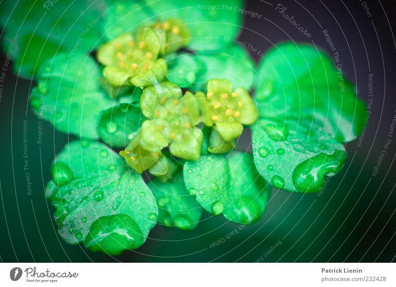 Raindrops Umwelt Natur Pflanze Urelemente Wassertropfen Frühling Blüte Grünpflanze Wildpflanze frisch glänzend hell schön grün nass Wachstum Makroaufnahme