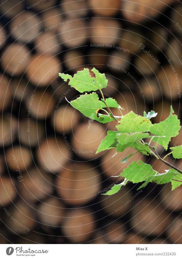 Bei Waldlust (Oberfranken) Natur grün Pflanze Sommer Blatt Holz Frühling Wachstum Sträucher Brennholz Birkenblätter zartes Grün