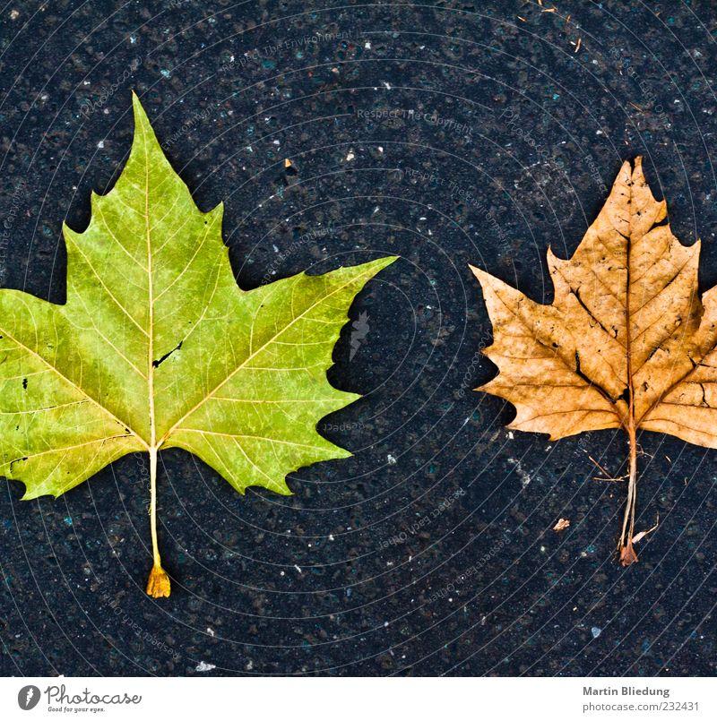 Natur alt grün Blatt schwarz Herbst grau braun Umwelt Beton Beginn neu Ende Originalität eckig