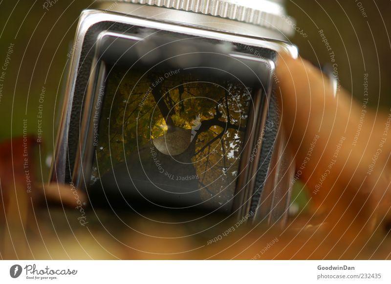 Der Vorgang. Umwelt Natur Erde Herbst Blatt Fotokamera Mittelformat alt eckig viele Stimmung Farbfoto Außenaufnahme Tag Licht Schatten Schwache Tiefenschärfe
