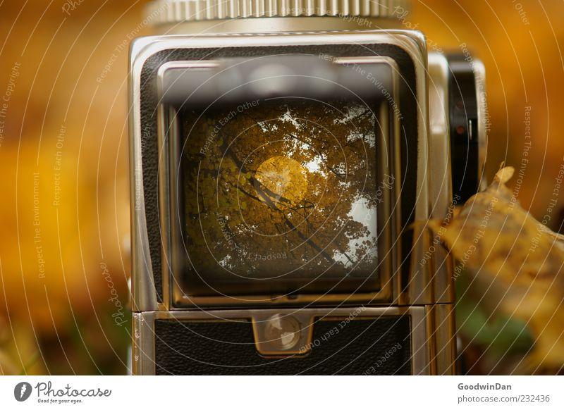 Der Vorgang. Umwelt Natur Herbst Wetter Pflanze Blatt Mittelformat Fotokamera alt authentisch eckig Farbfoto Außenaufnahme Menschenleer Tag Licht Schatten