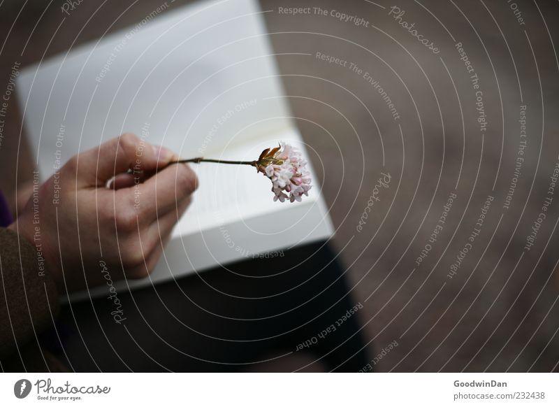 Abschied. Mensch Natur Hand schön Blume Umwelt feminin Stimmung Buch authentisch festhalten nah Medien