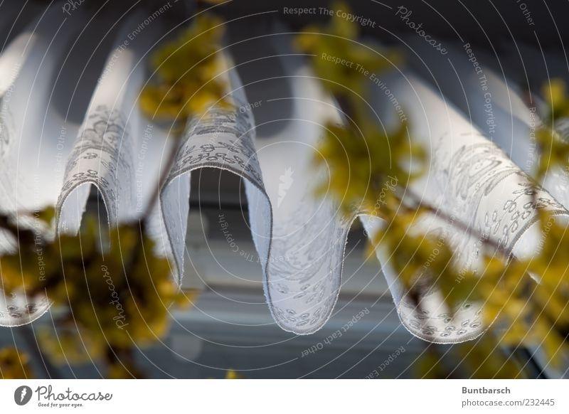 am Fenster weiß Pflanze ruhig gelb Blüte Wohnung Perspektive Sträucher Häusliches Leben Stoff Dekoration & Verzierung Falte Vorhang hängen Spitze Gardine