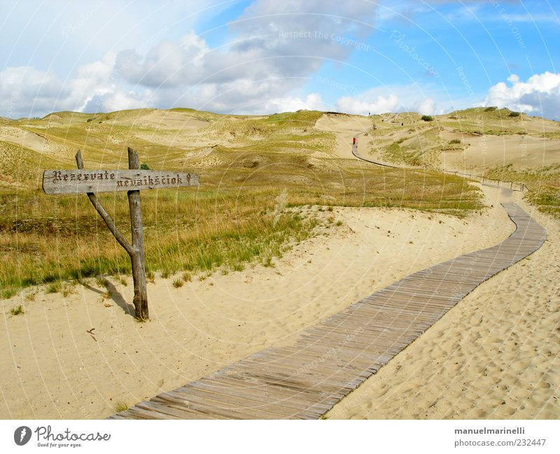 Polnische Wüste Natur grün blau Pflanze Sommer Strand Ferien & Urlaub & Reisen Landschaft Umwelt Sand Wärme Küste braun Erde Urelemente Hügel