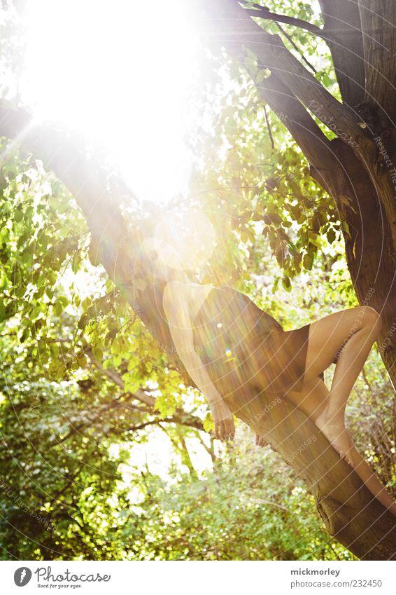 The Beauty of Light Mensch Natur Jugendliche schön Baum Sommer Blatt Erwachsene Wald Erholung Umwelt feminin Leben Frühling Beine sitzen