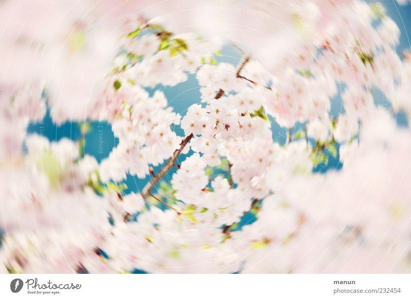 Kreisel Natur schön Baum Blatt Blüte Frühling natürlich außergewöhnlich hell rosa fantastisch Blühend Kitsch Duft drehen Frühlingsgefühle