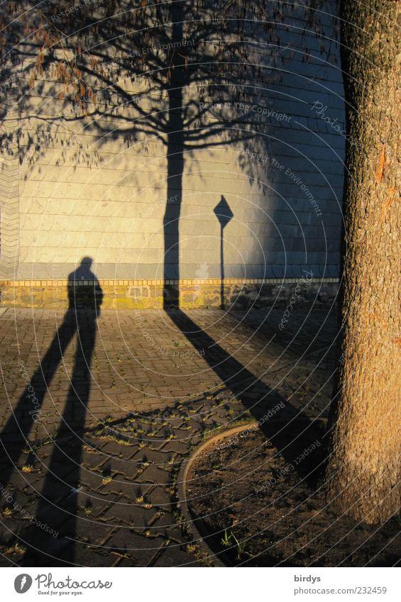 Surreallismus 1 Mensch Mauer Wand stehen außergewöhnlich fantastisch lang gold Warmherzigkeit Surrealismus Schatten Baum Bürgersteig Licht & Schatten