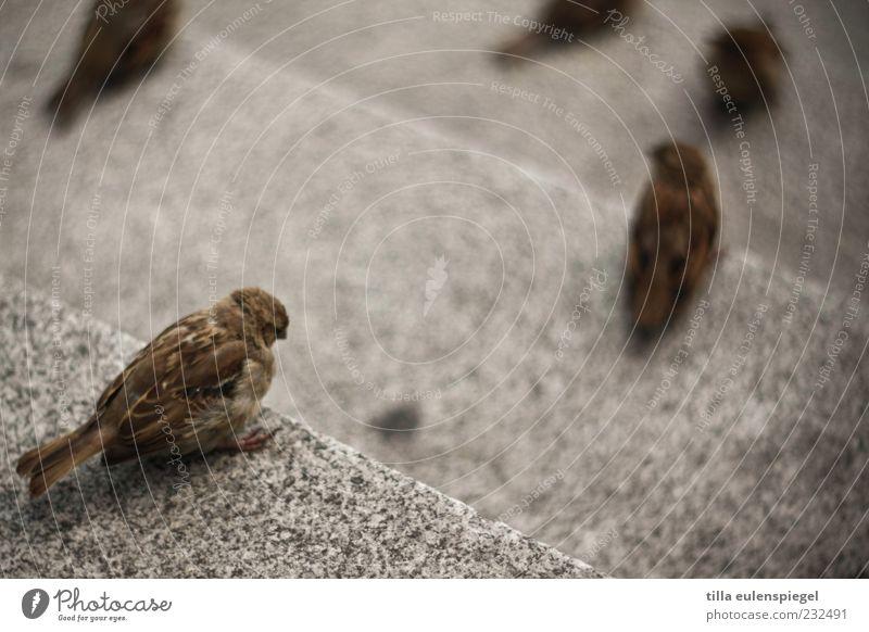 vogelperspektive Tier Stein Vogel warten klein sitzen beobachten Wildtier Treppe Spatz freilebend Steintreppe