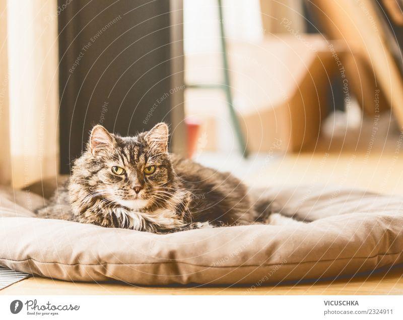 Alte Katze liegt auf Decke und schaut in die Kamera Lifestyle Häusliches Leben Raum Tier Haustier 1 Tierliebe Design alt Boden Farbfoto Innenaufnahme