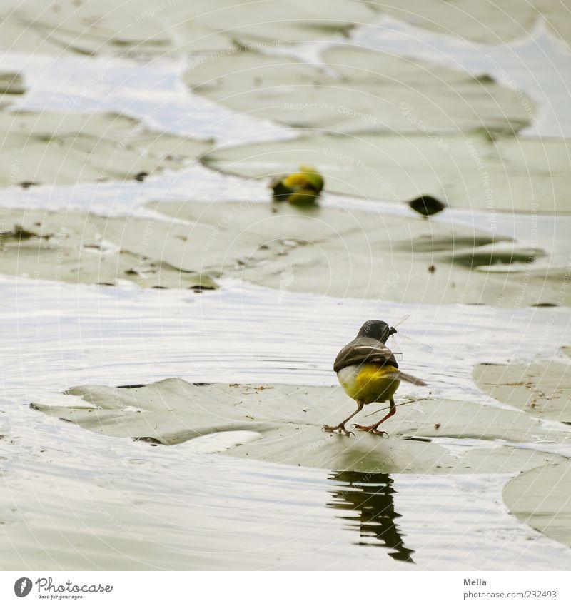 Schnapp! Natur Wasser grün Pflanze Blatt Tier See Vogel klein Umwelt natürlich fangen niedlich Teich Fressen Leichtigkeit