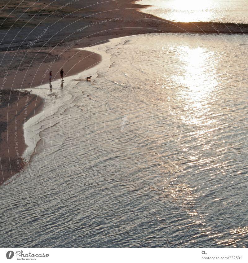 strandspaziergang Mensch Natur Hund Wasser schön Sommer Strand Tier ruhig Erholung Landschaft Spielen Freiheit Wärme Sand Küste