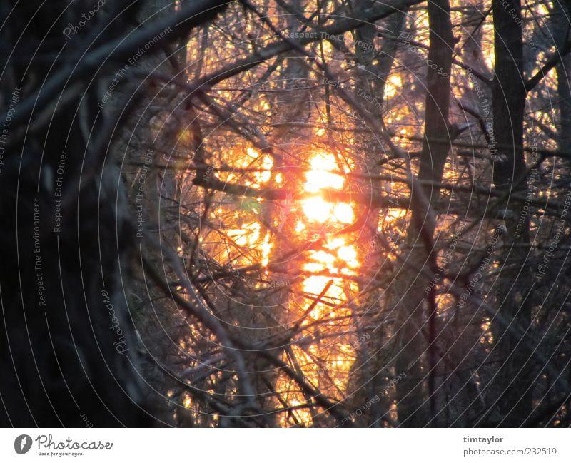 Sonne im Wald Natur Sonnenlicht Schönes Wetter Baum wild Farbfoto Außenaufnahme Menschenleer Gegenlicht Ast Zweig