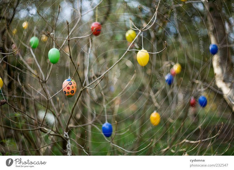 Detailverliebt Natur schön Baum Umwelt Leben Freiheit Garten Stil Frühling träumen Feste & Feiern Design Dekoration & Verzierung Lifestyle Sträucher einzigartig