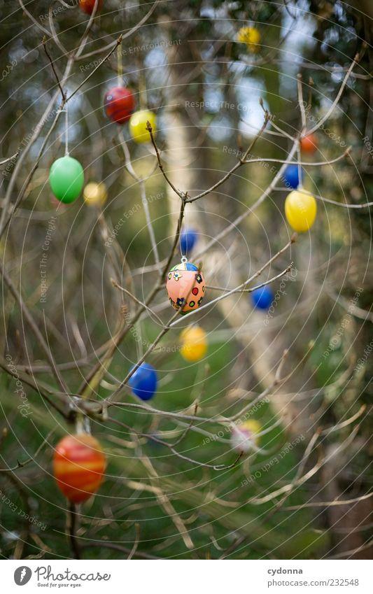 Kunterbunt Natur schön Baum Umwelt Leben Freiheit Garten Stil Frühling träumen Feste & Feiern Design Dekoration & Verzierung Lifestyle Sträucher einzigartig