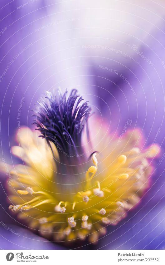 Immer diese Blümchenphotos Natur blau schön Pflanze Blume gelb Umwelt Blüte Frühling elegant frisch rund Urelemente violett exotisch sanft
