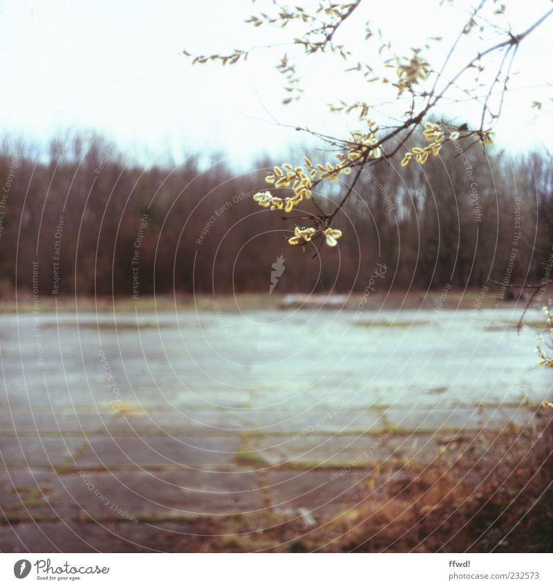 [FFM2011.1] Nevermore Natur alt Baum Pflanze Blatt Einsamkeit ruhig Umwelt Frühling nass Platz Wandel & Veränderung Sträucher Vergänglichkeit Ast Verfall