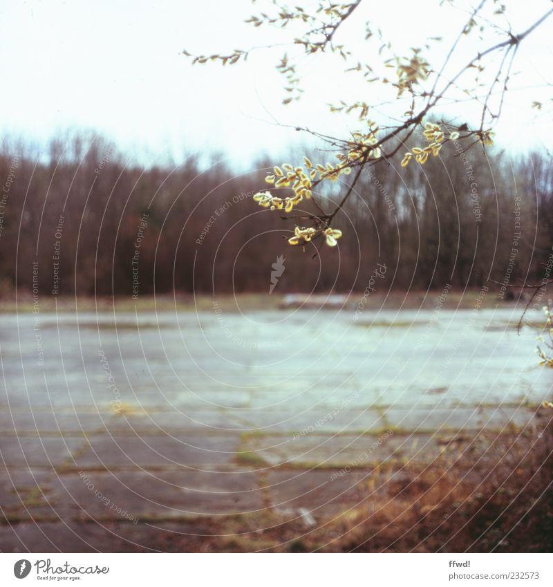 [FFM2011.1] Nevermore Umwelt Natur Pflanze Frühling Baum Sträucher Moos Blatt Ast Samen Menschenleer Platz alt ruhig Einsamkeit Endzeitstimmung Verfall