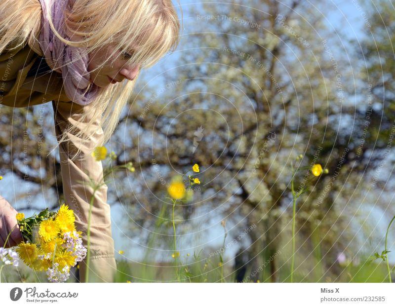 Blumenmädchen Mensch Frau Natur Jugendliche schön Baum Pflanze Sommer Blatt ruhig Erwachsene gelb Wiese feminin Garten Blüte