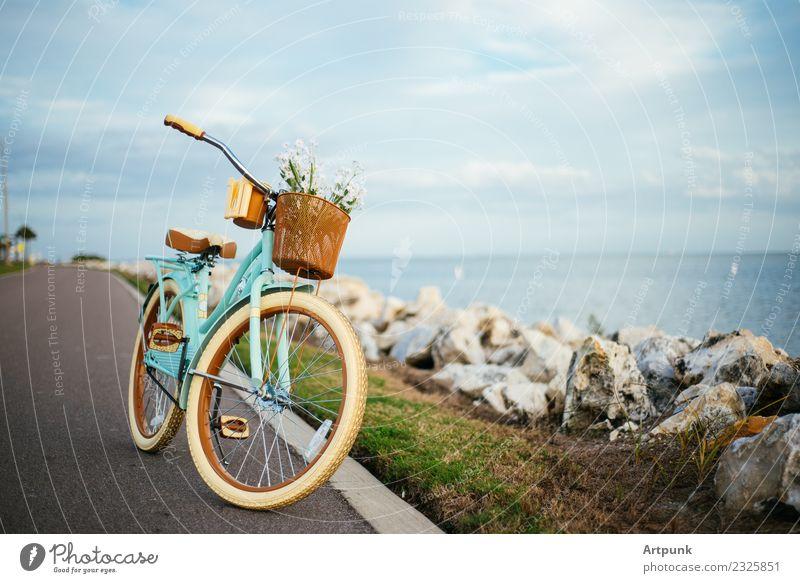 Himmel Ferien & Urlaub & Reisen Sommer Blume Wolken Strand Tourismus Fahrrad Aussicht Fahrradfahren Fahrradtour Korbblütengewächs tropisch üben Florida