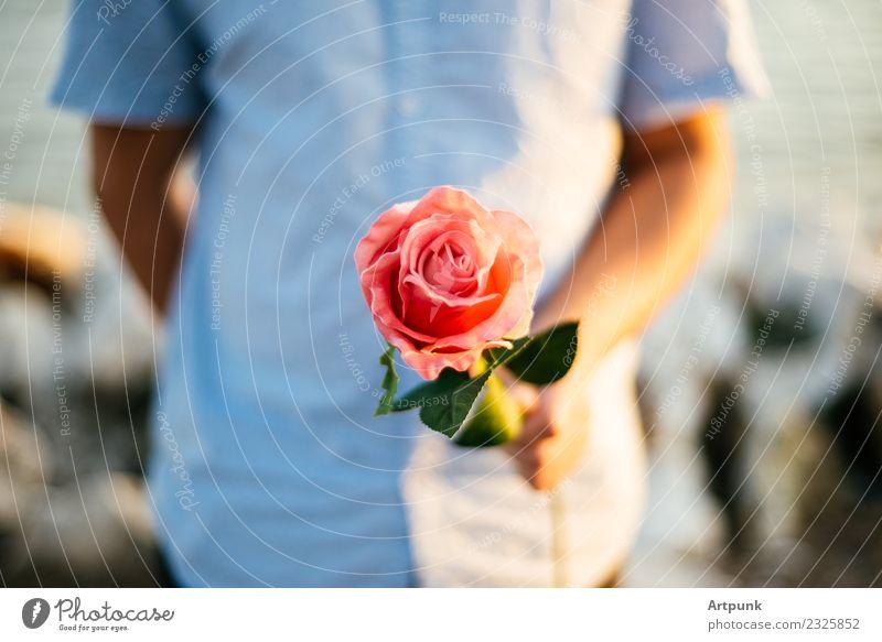 Junger Mann, der eine Rose anbietet. rosa Blatt Hemd Nahaufnahme Valentinstag Liebe Romantik Paar Hand Arme Schwache Tiefenschärfe Blume rot