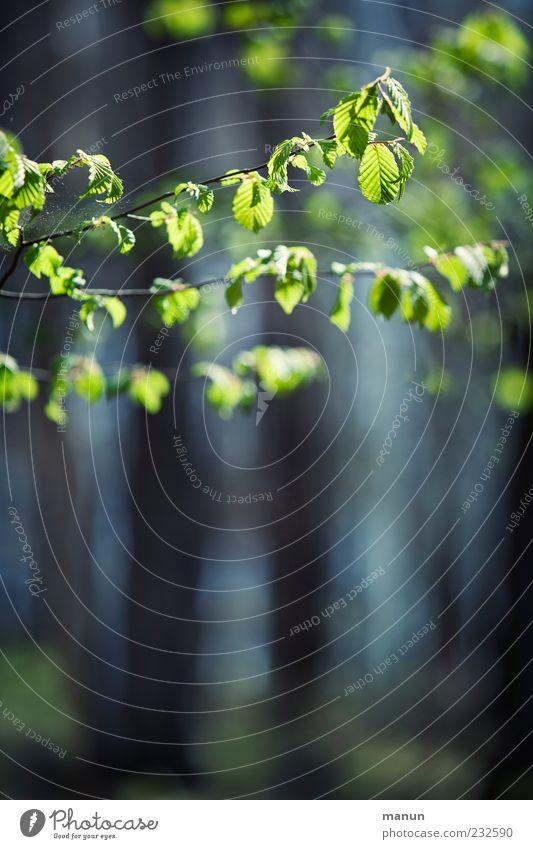 same procedure as every year... Natur Frühling Baum Blatt Zweige u. Äste Ast zartes Grün Frühlingsfarbe Wachstum dunkel authentisch einfach hell natürlich schön