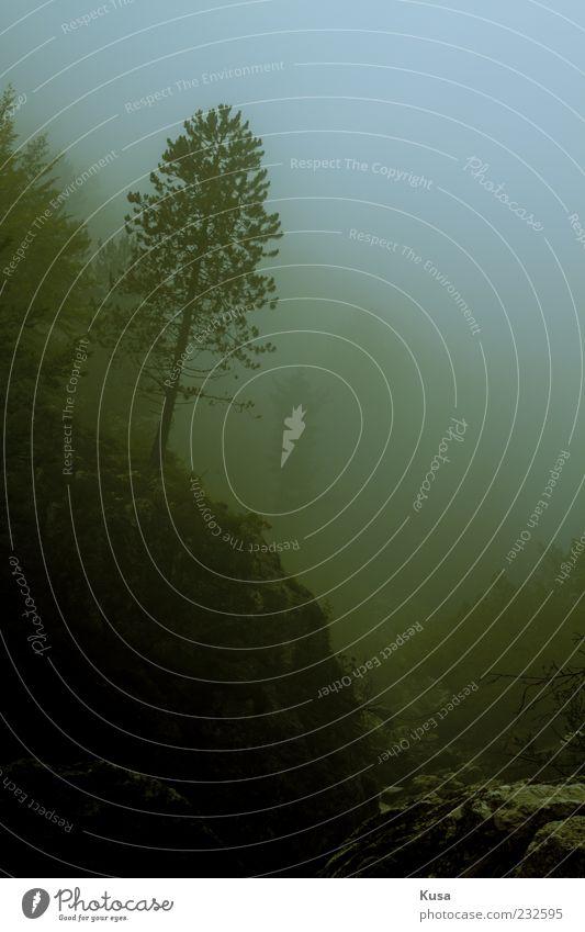 Natur schön Baum Wolken Einsamkeit Wald Herbst Berge u. Gebirge Umwelt träumen Traurigkeit Erde Regen Nebel Felsen