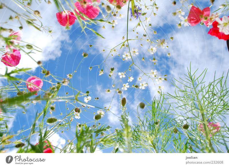 Erhebt euch hoch. Leben Wohlgefühl Sinnesorgane Duft Freiheit Sommer Sonne Natur Pflanze Himmel Wolken Sonnenlicht Frühling Schönes Wetter Wärme Blume Gras