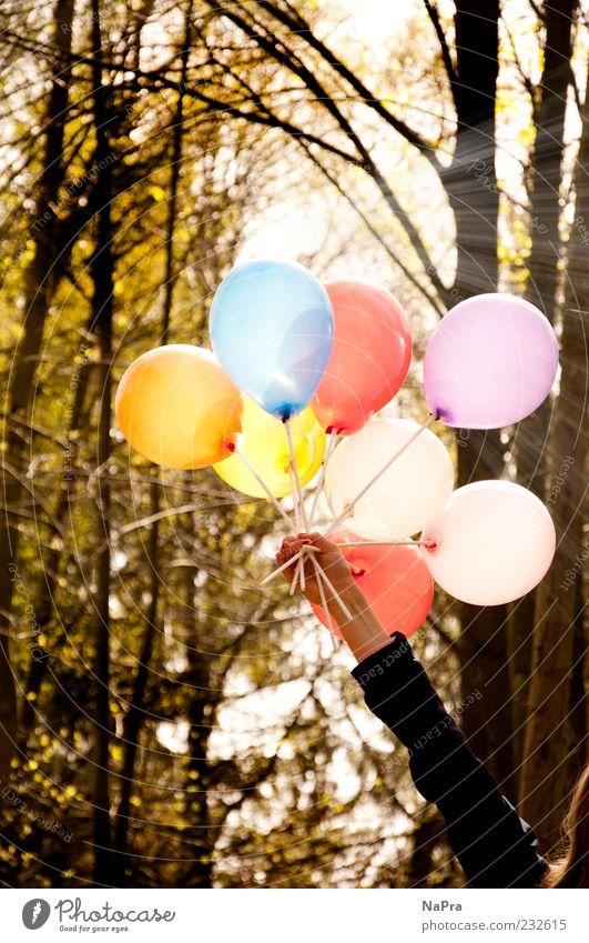 Balloon Mensch Natur Hand Baum Sonne Sommer Wald Umwelt Bewegung Frühling Feste & Feiern Arme Dekoration & Verzierung Luftballon Schönes Wetter Lebensfreude